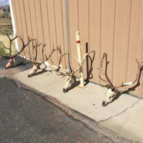 Two Utah families convicted of poaching more than a dozen elk
