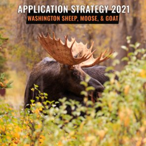 APPLICATION STRATEGY 2021: Washington Bighorn Sheep, Moose, and Mountain Goat