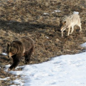 Sportsmen groups sue government over game management in Alaska