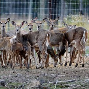228 deer euthanized