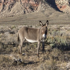 Groups unite over plan for wild horse and burro management