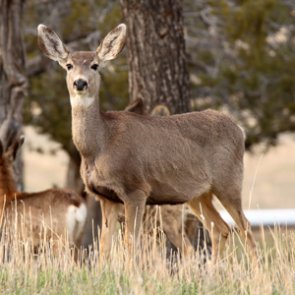 New wildlife crossing coming to California Highway 62