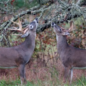 Montana senator guilty of poaching whitetail deer on private land