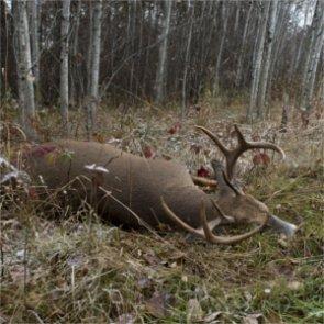 EHD outbreak affects South Dakota deer season