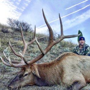 Bull elk scam? DIY backcountry hunt or high fence?