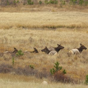 WGFD Holds Phase II of Elk Feedground Process