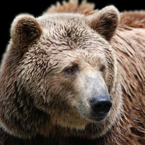 Guide mauled to death by grizzlies during elk hunt