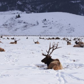Wyoming considers new regulations for shed hunting