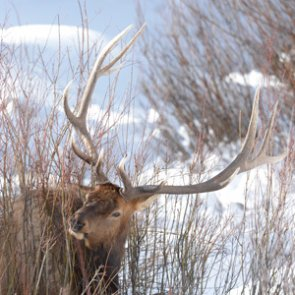 Wyoming Game and Fish Department preparing for major website changes