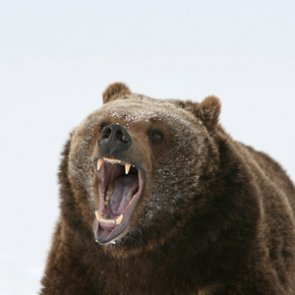 Man kills grizzly that killed family