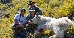 Mountain goats, family, friends and a hunt to remember