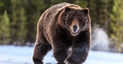 ALERT: Alaska revises 2020 bear hunt closure to allow resident hunting only