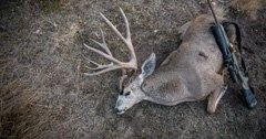 What happened to mule deer in Colorado and what does the future hold?