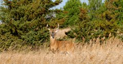 Is bleach a solution to CWD?