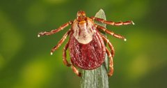 Tick awareness and prevention for hunters