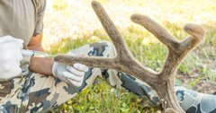 How to preserve velvet antlers in the field
