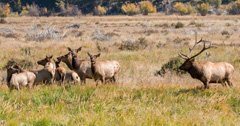 Idaho charges six men with poaching big game