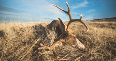 Updated Montana CWD Management Zones For 2019