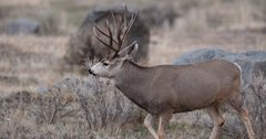 Oregon man cited for importing CWD-infected deer carcass