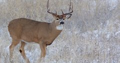 New deer management program in place for Nebraska