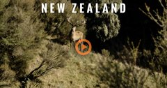 New Zealand — An International Adventure (Trailer)