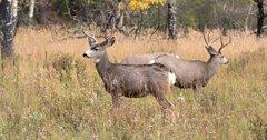 Mild winter helps North Dakota mule deer