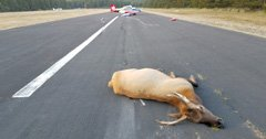 Elk cause Oregon plane crash
