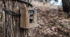 Three crucial trail camera tips for this season