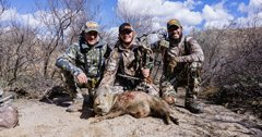Arizona javelina hunting opportunities