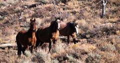 Oregon to cut wild horse population in Ochoco National Forest in half