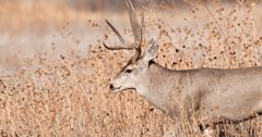 Wyoming releases new CWD management plan