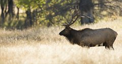 "Wyoming CWD panel will ""ignore"" elk feeding grounds"