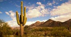 Arizona wildlife suffers from western drought