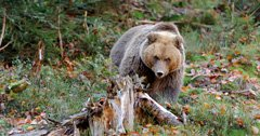 Montana man attacked by grizzly bear