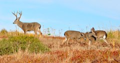 Canada confirms disease in Vancouver deer