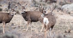 New bipartisan bill could unite stakeholders to combat CWD