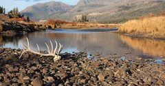 New restrictions for shed hunting in Colorado
