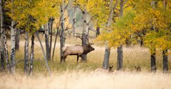 CWD confirmed in Colorado elk, deer and moose