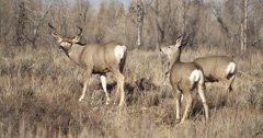 Wyoming mule deer receive more funding