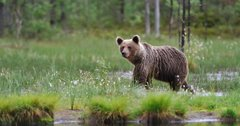 Environmental groups file lawsuit to ban bear-baiting in Wyoming and Idaho
