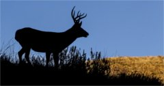 CWD spreads across Wyoming