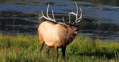 Brothers charged with poaching elk in Montana