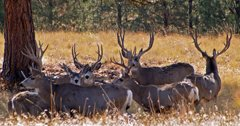 Eight mule deer poached in Montana