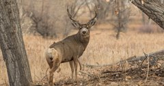 New Mexico man guilty of poaching mule deer buck