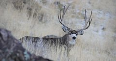 Montana approves 2018-2019 hunting regulations