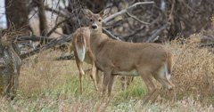 License sales surge in New York for regular deer season