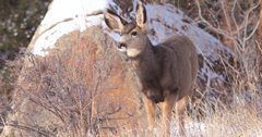 North Dakota fawn recruitment improves