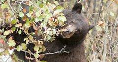 "Oregon investigates ""frenzy of poaching"""