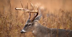 Pennsylvania celebrates successful deer season