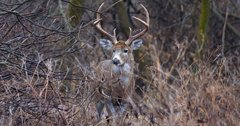 Season strategies for private and public land whitetails